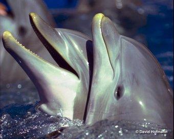De Sbd Site Dolfijnen En Bruinvissen